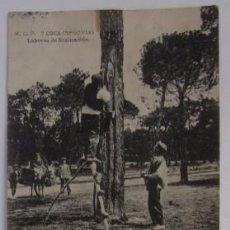 Postales: ANTIGUA POSTAL DE COCA - LABORES DE RESINACION. Lote 52702784