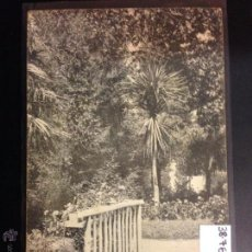 Postales: BEJAR - JARDINES DEL BOSQUE - FOTOTIPIA CASTAÑEIRA, ALVAREZ ... (38767). Lote 52845028