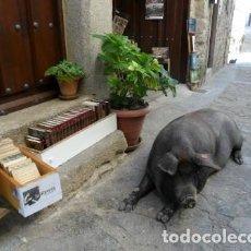 Postales: POSTAL DE MOGARRAZ. ANTÓN VII. Lote 85763292