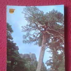 Postales: POSTAL CASTILLA Y LEÓN NEILA BURGOS EMISORA FORESTAL POSTALES PILMAR POSTE D´ÉMISSION FORESTIER...... Lote 194301238