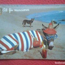 Postales: POSTAL POST CARD BURRO BURRITO ANE DONKY DONKEY ESEL Y PERRO DOG CHIEN EN PLAYA AL FIN VACACIONES.... Lote 195347611