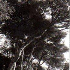 Postales: POSTAL DE ARGENTONA - MANANTIAL BURRIACH - FOTO: A. GÜELL. Lote 12725785