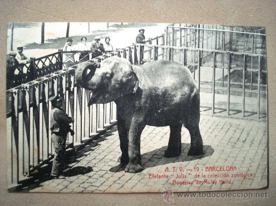 Resultat d'imatges de elefanta Julia