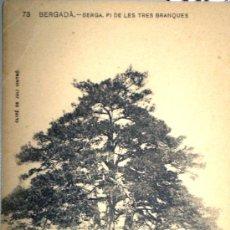 Cartes Postales: CASTELLAR DEL RIU PI DE LAS TRES BRANCAS BERGA BERGUEDA SERIE ENSENYANZA CATALANA ESCRITA 1920. Lote 23211459