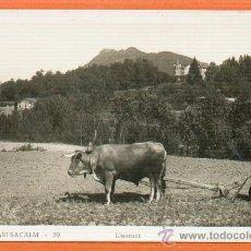 Postales: SANT HILARI SACALM - LLAURANT SIN CIRCULAR Nº 19. Lote 26468273
