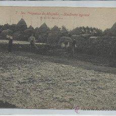 Postales: SANTA PERPETUA DE LA MOGUDA-7-SINDICATO AGRICOL(REF-974). Lote 29745819