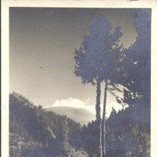 Postales: PS2042 LA MOLINA 'TORRENTE DE COLL DE PAL'. POSTAL FOTOGRÁFICA. CIRCULADA EN 1945. Lote 31265576
