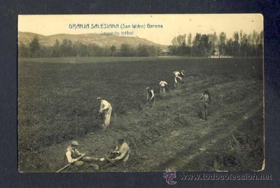 POSTAL DE GIRONA: GRANJA SALESIANA (SANT ISIDRE): SEGANT EL TRÈBOL. FOTOGRAFICA ANTIGA (FABERT) (Postales - España - Cataluña Antigua (hasta 1939))