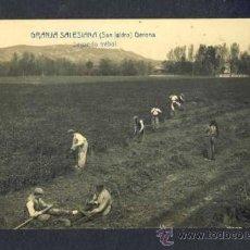Postales: POSTAL DE GIRONA: GRANJA SALESIANA (SANT ISIDRE): SEGANT EL TRÈBOL. FOTOGRAFICA ANTIGA (FABERT). Lote 32695834