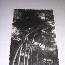 Postales: ARGENTONA MANANTIAL BURRIACH ,FOTO A. GUELL 14X9 CM. . Lote 37367386