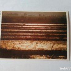 Postales: ANTIGUA POSTAL LA VANGUARDIA CATALUNYA UNIVERSAL AÑOS 90: CULTIVOS DELTA DEL EBRO (10'2 X 14'8 CM). Lote 140807746