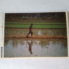 Postales: ANTIGUA POSTAL LA VANGUARDIA CATALUNYA UNIVERSAL AÑOS 90: CAMPOS ARROZ, DELTA EBRO (10'2 X 14'8 CM). Lote 140808050