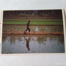 Postales: ANTIGUA POSTAL LA VANGUARDIA CATALUNYA UNIVERSAL AÑOS 90: CAMPOS ARROZ, DELTA EBRO (10'2 X 14'8 CM). Lote 140808174