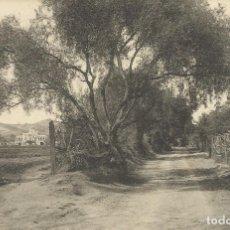 Postales: POSTAL DE MATARÓ RIERA DE CIRERA. EDICIÓN ABADAL. NO CIRCULADA. TARJETA POSTAL. FOTOTIPIA THOMAS.. Lote 132661918
