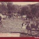 Postales: CAMPRODON - PRAT DE LA CAMPA - L ROISIN 53 - CIRCULADA. Lote 167954340