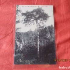 Postales: A. T. V. 8. SANTUARI DE S. MAGI. PI DE LA FOU. POSTAL 9 X 14 CM.. Lote 180043347