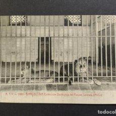 Postales: BARCELONA-COLECCION ZOOLOGIC DEL PARQUE-LEONES-ATV 2861-POSTAL ANTIGUA-(64.771). Lote 184392876