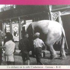 Postales: UN ELEFANTE CALLE CIUDADANOS GERONA GIRONA. Lote 206960437