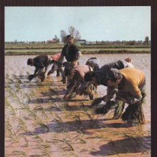 Postales: TORTOSA. *PLANTANDO ARROZ EN EL DELTA DEL EBRO* ED. BV - FOTO DAUFI Nº 47. CIRCULADA 1983.. Lote 218218770