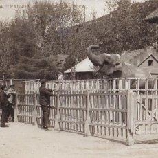 Cartes Postales: BARCELONA, PARQUE, ELEFANTE BABY. ED. LB, LUIS BARTRINA Nº 29. FOTOGRAFICA. SIN CIRCULAR. Lote 254058390