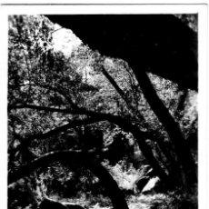 Postales: SENTMENAT - FONT DE BOU - FOTO ROSIÑOL Nº 9 - 140X90 MM - INÉDITA EN TODOCOLECCIÓN. Lote 277221488