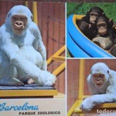Cartoline: POSTAL * BARCELONA , PARC ZOO . FLOQUET DE NEU ( COPITO DE NIEVE ) - MONOS * 1969. Lote 278332853