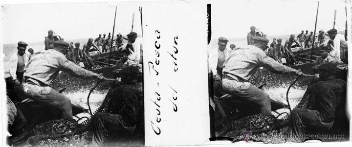 CEUTA, PESCA DEL ATUN, FOTOGRAFIA ESTEREOSCOPICA EN CRISTAL APROXIMADAMENTE 1910 . 1920. MIDE 10,6 (Postales - España - Ceuta Antigua (hasta 1939))