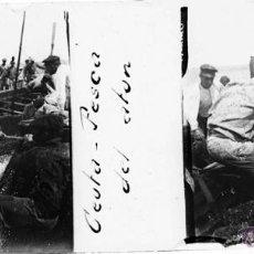 Postales: CEUTA, PESCA DEL ATUN, FOTOGRAFIA ESTEREOSCOPICA EN CRISTAL APROXIMADAMENTE 1910 . 1920. MIDE 10,6 . Lote 42920725