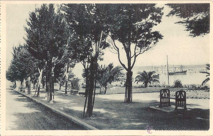 CEUTA, JARDINES DE LA HÍPICA - FOTOTIPIA HAUSER Y MENET - SIN CIRCULAR (Postales - España - Ceuta Antigua (hasta 1939))