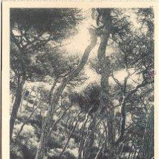 Postales: CEUTA, BOSQUE DE SAN ANTONIO - FOTOTIPIA HAUSER Y MENET 15 - SIN CIRCULAR. Lote 60295619