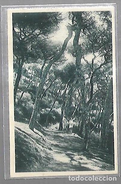 TARJETA POSTAL CEUTA - BOSQUE DE SAN ANTONIO. 15. HAUSER Y MENET (Postales - España - Ceuta Antigua (hasta 1939))