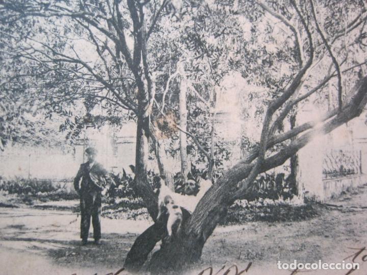Postales: CEUTA-PASEO DE SAN AMARO-VIUDA DE J. MARTINEZ-REVERSO SIN DIVIDIR-POSTAL ANTIGUA-(83.027) - Foto 2 - 283689243
