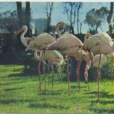 Cartoline: POSTAL MADRID: ZOO DE LA CASA DE CAMPO. FLAMENCO ROJO Nº 4 P-MAD-309,2. Lote 43302608