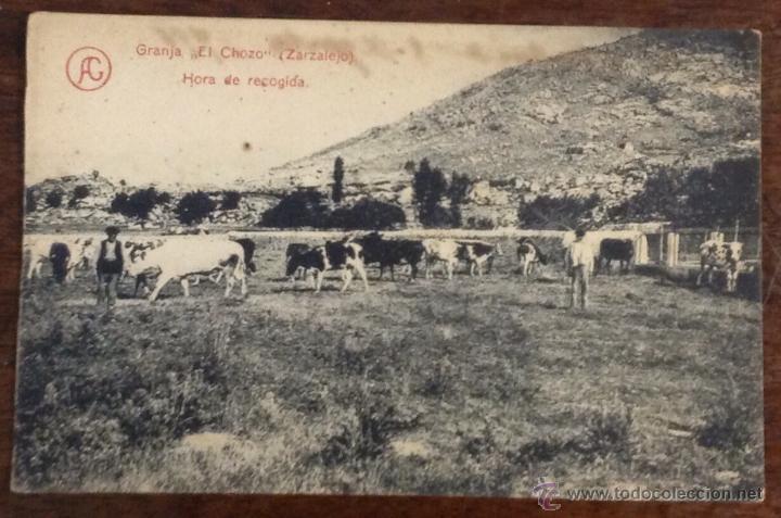 GRANJA 'EL CHOZO'. ZARZALEJO. HORA DE RECOGIDA. (FOT. LACOSTE) (Postales - España - Comunidad de Madrid Antigua (hasta 1939))