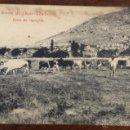 Postales: GRANJA 'EL CHOZO'. ZARZALEJO. HORA DE RECOGIDA. (FOT. LACOSTE). Lote 44233201