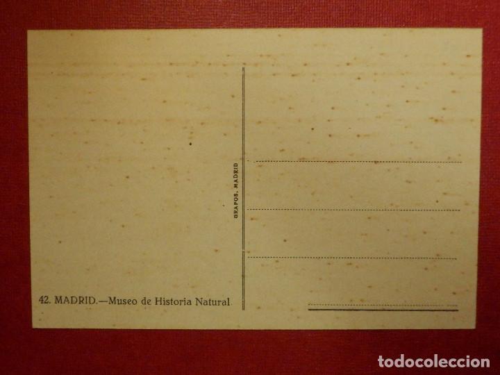 Postales: POSTAL - ESPAÑA - MADRID - 42.- MUSEO DE HISTORIA NATURAL - GRAFOS - SIN CIRCULAR - Foto 2 - 115428159