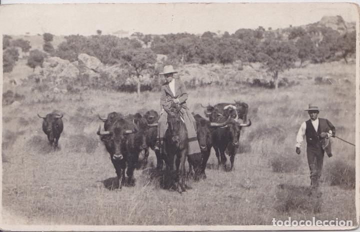CAMPOS DE MADRID (MADRID) - GANADERIA DE TOROS DE LIDIA (Postales - España - Comunidad de Madrid Antigua (hasta 1939))