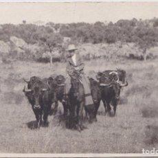 Postales: CAMPOS DE MADRID (MADRID) - GANADERIA DE TOROS DE LIDIA. Lote 168524148