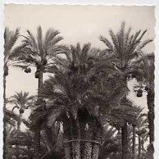 Postales: ALICANTE. ELCHE. HUERTO DEL CURA. LA PALMERA IMPERIAL DE LOS OCHO BRAZOS. GARCIA GARRABELLA Nº 29. . Lote 7592888