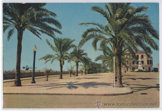 POSTAL DE VINAROZ PASEO CASTELLON (Postales - España - Comunidad Valenciana Moderna (desde 1940))