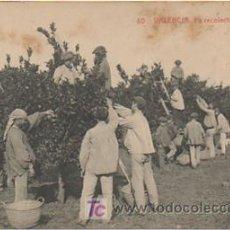 Postales: VALENCIA. LA RECOLECCIÓN DE NARANJAS. (THOMAS, 130). . Lote 9812425