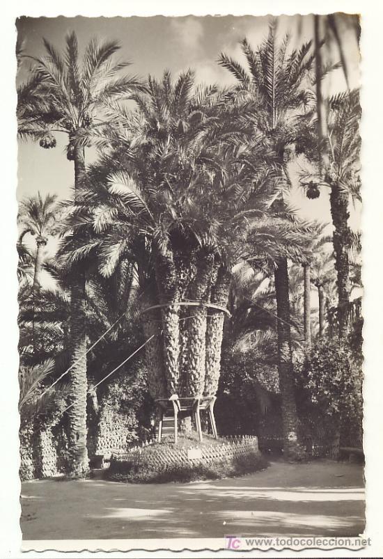 ELCHE. HUERTO DEL CURA. PALMERA IMPERIAL. ED. GARCIA GARRABELLA (Postales - España - Comunidad Valenciana Moderna (desde 1940))