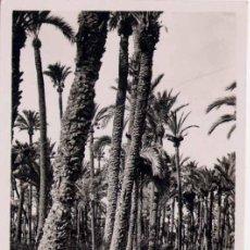 Postales: ELCHE (ALICANTE).- HILADORES EN EL HUERTO DEL COLOMER. Lote 21974371