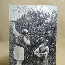 Postales: FOTOGRAFIA, FOTO, POSTAL, EN LA HUERTA DE VALENCIA, Nº 24, 14 X 9 CM, E.B.P.,. Lote 24085422