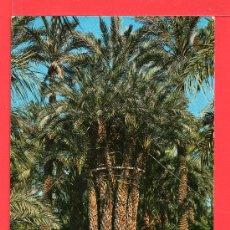 Postales: POSTAL DE ELCHE HUERTO DEL CURA PALMERA IMPERIAL Nº 8 EDICION GARCIA GARRABELLA SIN CIRCULAR . Lote 27855103