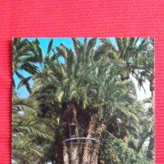 Postales: ELCHE - HUERTO DEL CURA - PALMERA IMPERIAL. Lote 28162015