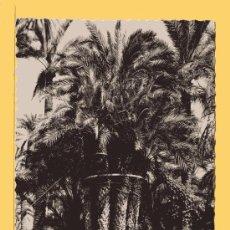 Postales: POSTAL DE ELCHE HUERTO DEL CURA PALMERA INPERIAL EDICION GARCIA GARRABELLA SIN CIRCULAR . Lote 31731298