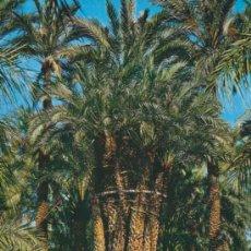 Postales: POSTAL - HUERTO DEL CURA - ELCHE - ALICANTE - GARCIA GARRABELLA - 8. Lote 32662401