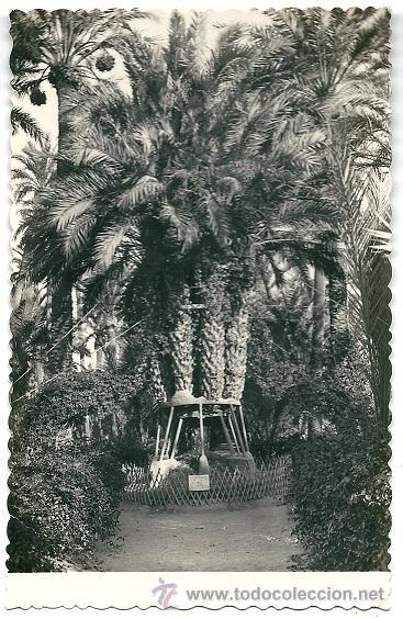 0831C - ELCHE (ALICANTE )PALMERA DEL CURA - EDICIONES GARCIA GARRABELLA (Postales - España - Comunidad Valenciana Moderna (desde 1940))