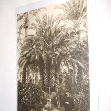 Postales: ELCHE ALICANTE PALMERA DEL CURA LA IMPERIAL POSTAL FOTOGRAFICA ED. BOTELLA . Lote 34376826